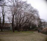 0329ohanamihiroba